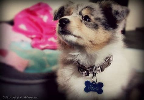 cutest puppies in the whole world 17 best ideas about cutest puppy on baby puppies cutest dogs and baby