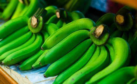 imagenes platanos verdes comerciantes solicitan al gobierno exportar pl 225 tanos