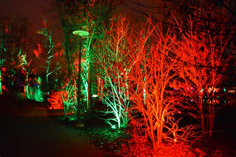 holiday tree light show at morton arboretum shawna coronado