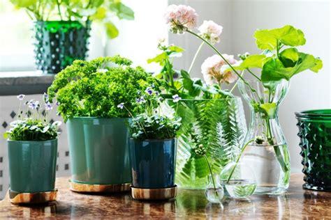 vasi per piante aromatiche piante aromatiche in vaso per la cucina living corriere