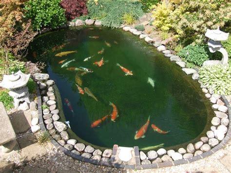 Bassin à Poisson Exterieur la carpe koi 42 photos de la des bassins