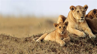 In Kenya taste of kenya a safari from kuoni travel