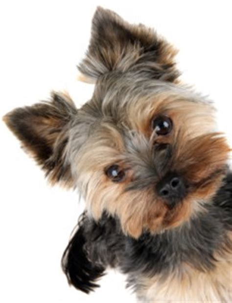 yorkie has diarrhea best crate for potty toddler keeps going toilet diarrhea how to