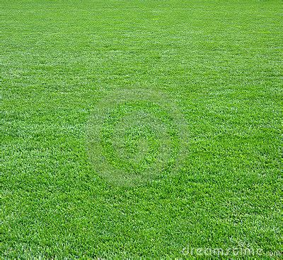 green grass field square royalty  stock images image