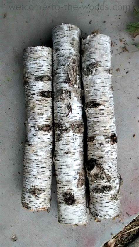 Birch Tree Decorations by Birch Tree Diy Decor Welcome To The Woods