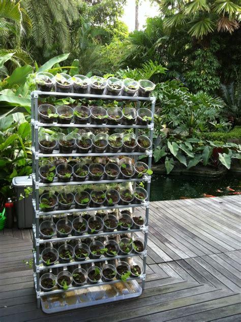 easy  grow   organic vegetables  home