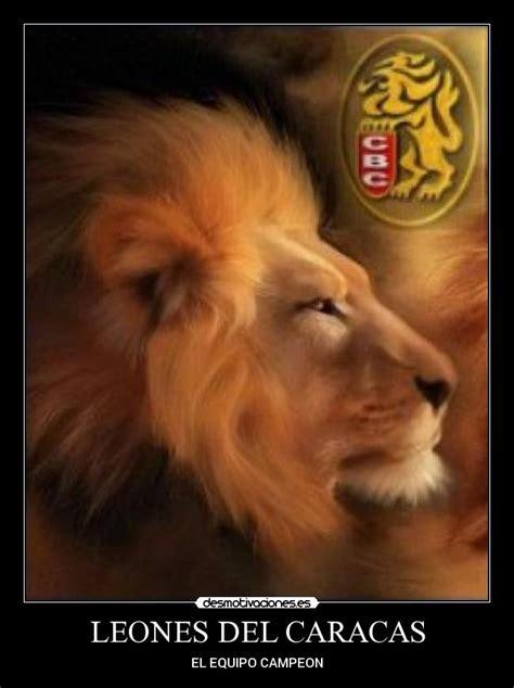 imagenes graciosas leones del caracas leones del caracas desmotivaciones