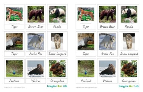 montessori printables animals animals of asia for the montessori wall map quietbook