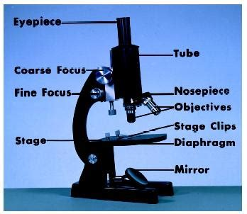 name one advantage of light microscopes electron microscopes adorun s just another com site