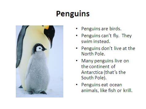 penguin facts for exciting facts about penguins facts about animals volume 18 books the sweetest melody penguin songs