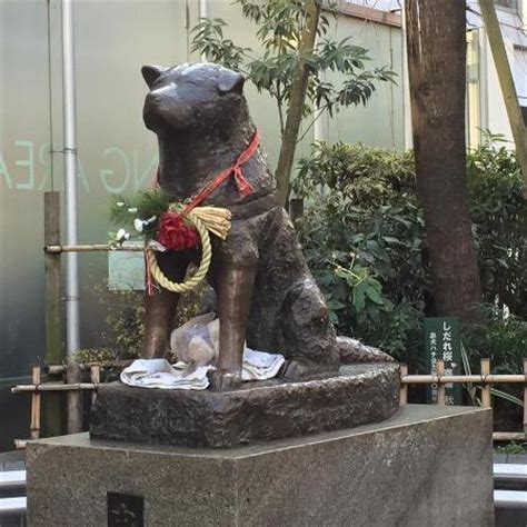 hachi the hachi the picture of hachiko shibuya tripadvisor