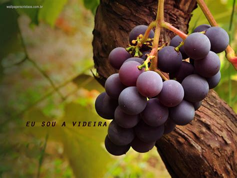 imagenes hd uvas a videira wallpapers crist 227 os