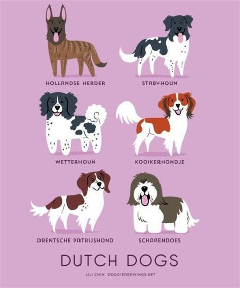 Your Dogs Nationality by A Guide To Which Nationality Your Really Comes From