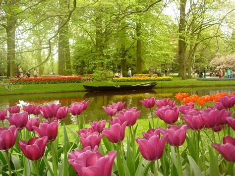 flowers in the garden of jardins keukenhof na holanda abrem temporada 7 milh 245 es