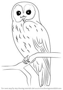 how to draw doodle owl learn how to draw a owl owls step by step