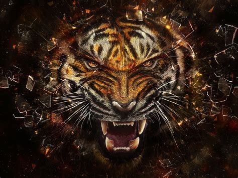 Angry Tiger   Tigers Wallpaper (31737545)   Fanpop