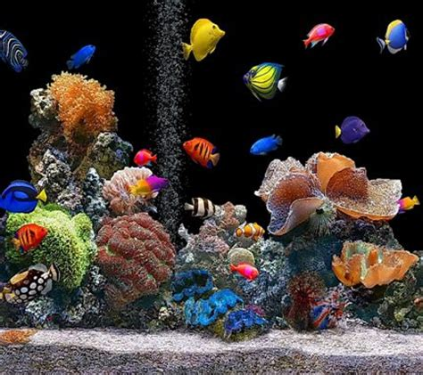 zedge live wallpaper for iphone 5 download live aquarium wallpapers to your cell phone