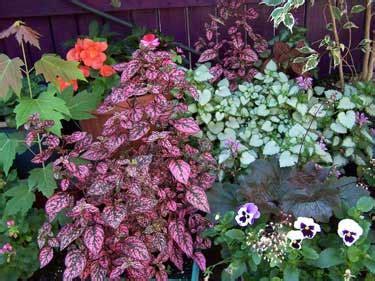Choosing Plants For Shade Garden Flowers For Shade Gardens