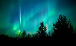 northern lights tree northern lights trees boralis australis
