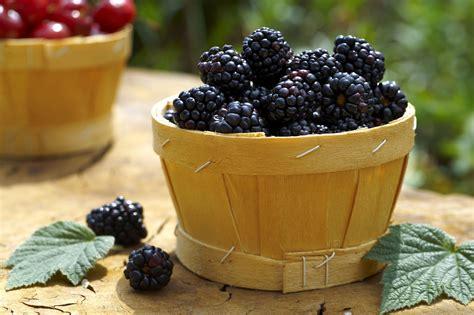 guide  oregon seasonal fruits  vegetables
