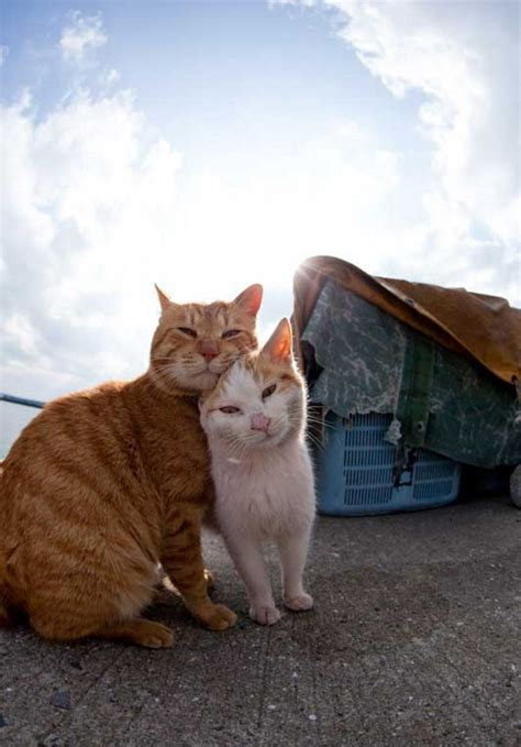 cat island in japan cat island in japan is heaven for japanese cats in fukuoka