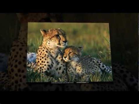 imagenes en 3d de animales salvajes fondos de pantalla de animales salvajes www tu pc com