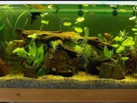 aquarium decoration ideas freshwater aquarium decoration ideas youtube diy aquarium
