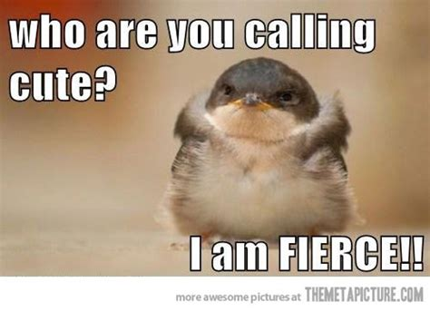 Cute Baby Animal Memes - stop calling me cute the meta picture