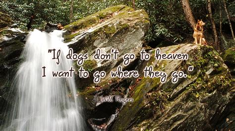 dogs in heaven dogs in heaven quotes quotesgram