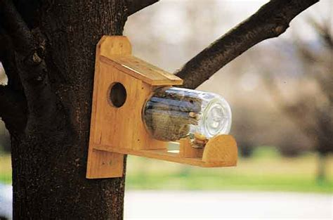 squirrel under glass feeder squirrel feeder diy garden projects birds blooms