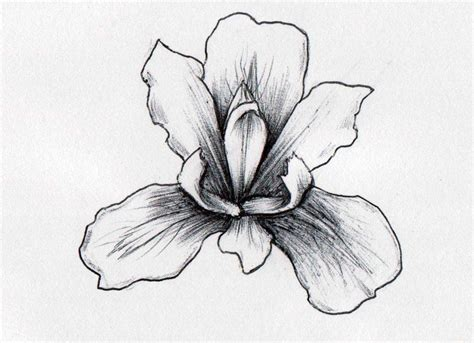 black iris tattoo my drawing of an iris in pencil then shaded with