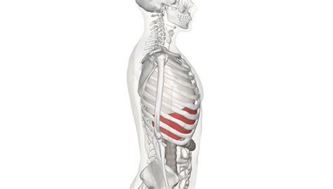 bruciore di stomaco alimentazione dolori allo stomaco alimentazione per reflusso gastro