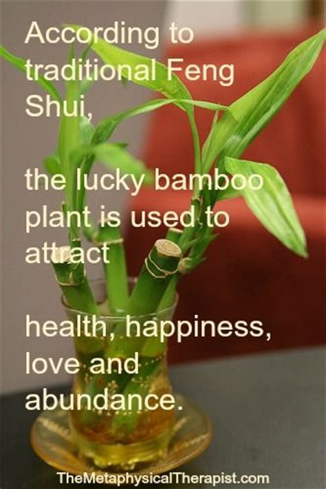 feng shui bamboo plant in bedroom 1000 images about feng shui on pinterest