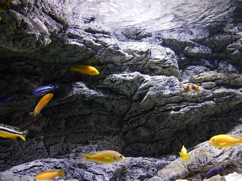 alpenkalk rollputz erfahrung alpen kalk alpenkalk slimline alpenkalk aquarium