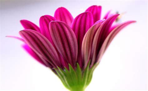 spring flower images spring flower spring photo 22176811 fanpop