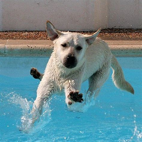 when can puppies walk walking on water look me i can walk on the water