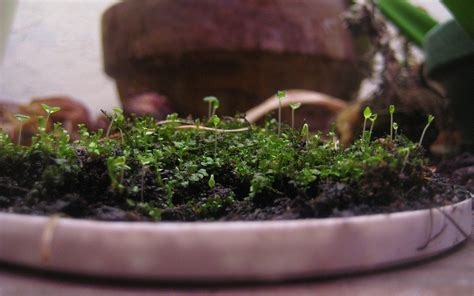 how to grow moss indoors tips for creating an indoor