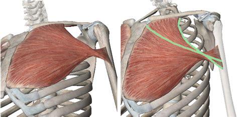 muscolo sedere 1 come allungare pettorali e spalle
