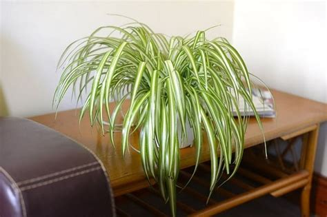 plants  reduce humidity indoors balcony garden web