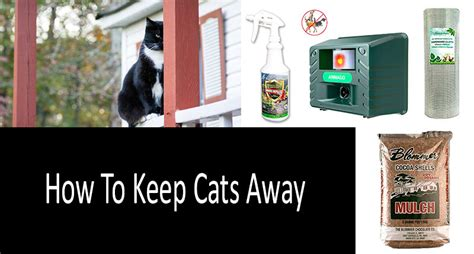 how to keep cats away top 9 products and devices