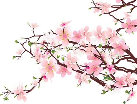 branch clipart sakura pencil and in color branch clipart