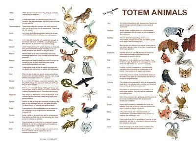 test animale totem 204 best images about animal totems spirits among us
