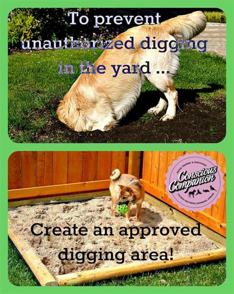 pets you can find in your backyard best 25 dog yard ideas on pinterest dog fence fence