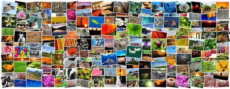 3d frau erstellen was sind collage programme netzsieger