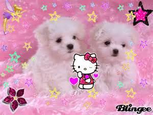 descargar imagenes de monos negros los bonitos perritos lindos fotograf 237 a 108264718 blingee com