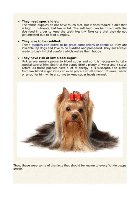 about puppies 5 must facts about yorkie puppies