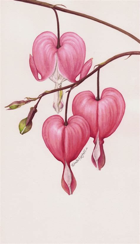 bleeding heart flower tattoo eunike nugroho dicentra the bleeding flower