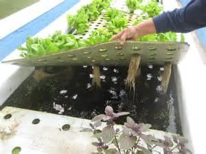 aquaponic gardening march 2011