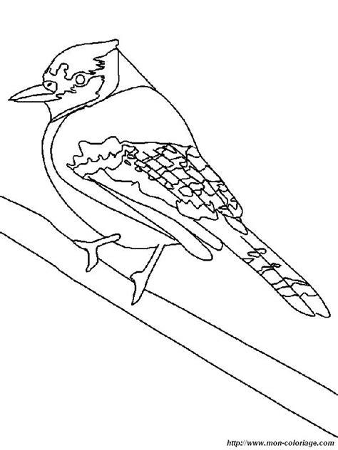 Coloriage de Oiseau, dessin un geai bleu à colorier