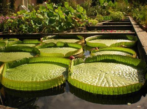 Best Botanical Gardens In The World 13 Best Botanical Gardens In The World Triphobo